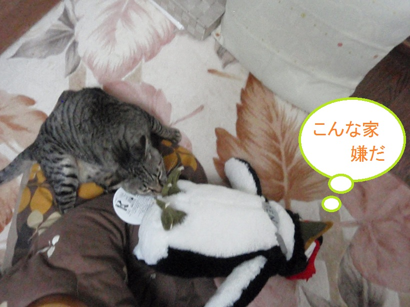 vs 巨大ペンギン_e0331868_2154570.jpg