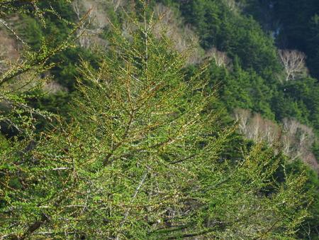 新緑の美しい季節_e0120896_641162.jpg