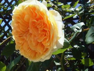 薔薇のオープンガーデンに出店_f0255704_10551791.jpg
