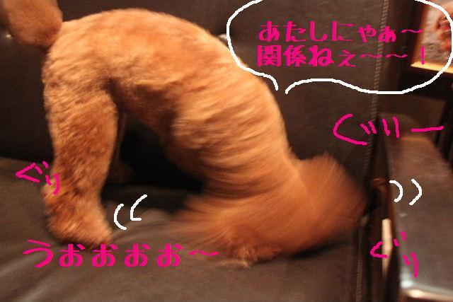 b0130018_116524.jpg