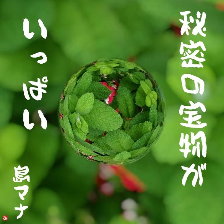宝探し♪( ´▽`)_f0183846_9522121.jpg