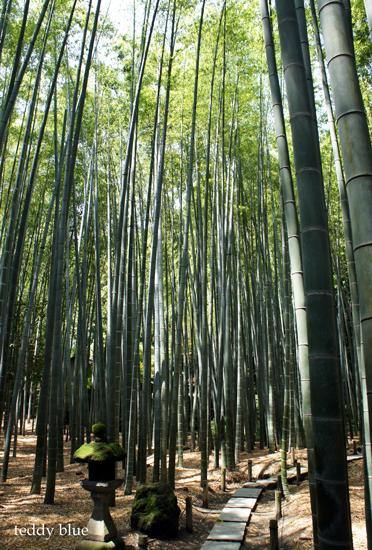 Kamakura Pilgrimage  鎌倉三十三観音巡り 一日目_e0253364_14245526.jpg