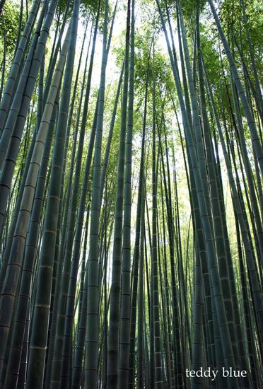 Kamakura Pilgrimage  鎌倉三十三観音巡り 一日目_e0253364_14253392.jpg