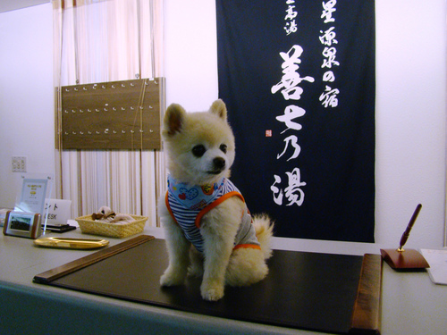 あの有名犬にお泊まりいただきました!_b0185375_11412276.jpg