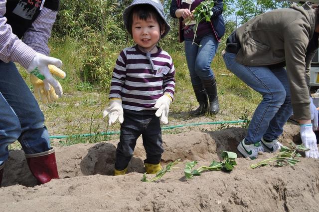 『シルじぃちゃん先生と一緒にサツマイモの苗を植えよう.』:5月24日金曜日_b0079382_13503310.jpg