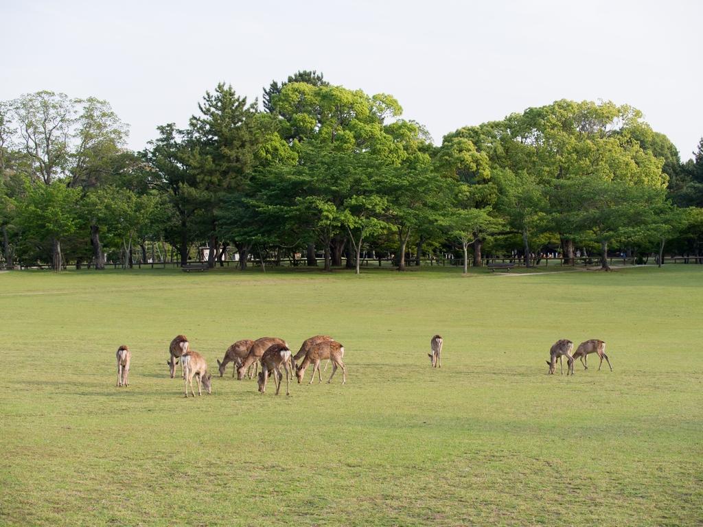 「パナソニック12-35mm、35-100mm初撮りPart2~奈良公園の鹿~」_a0133692_16114130.jpg