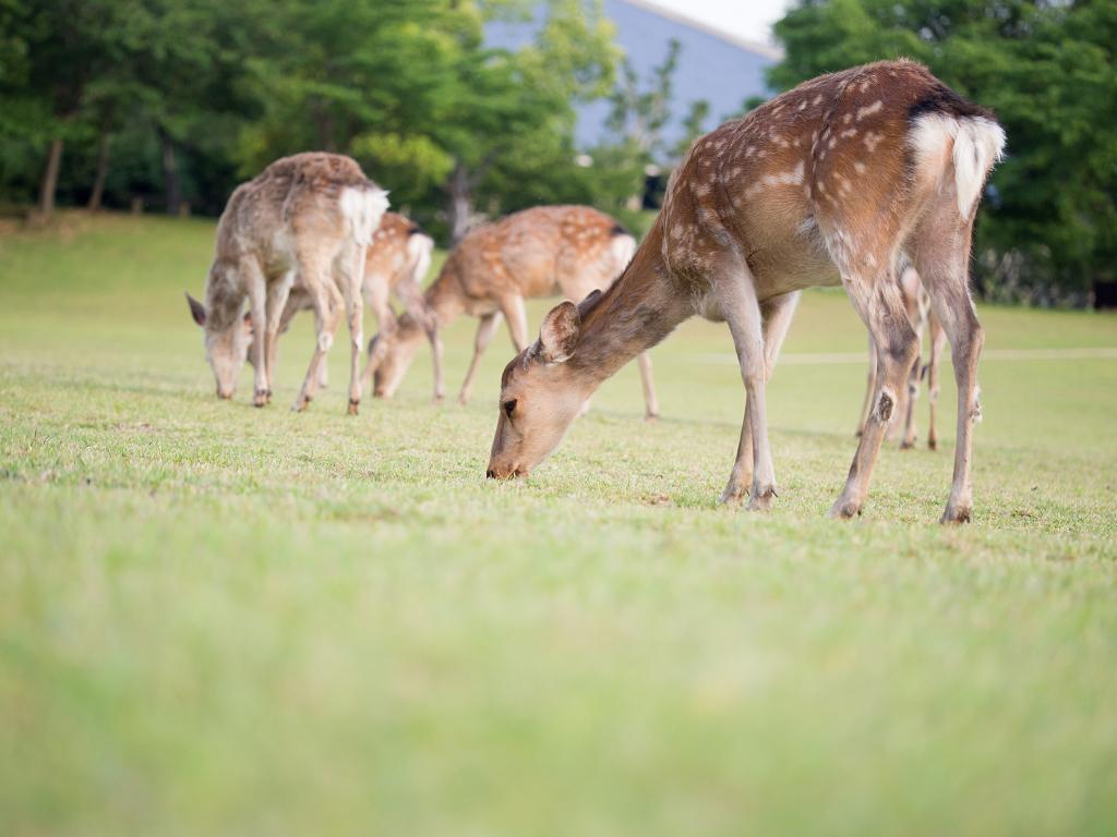 「パナソニック12-35mm、35-100mm初撮りPart2~奈良公園の鹿~」_a0133692_1617767.jpg