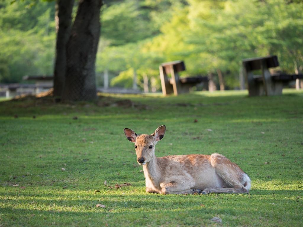 「パナソニック12-35mm、35-100mm初撮りPart2~奈良公園の鹿~」_a0133692_16225541.jpg