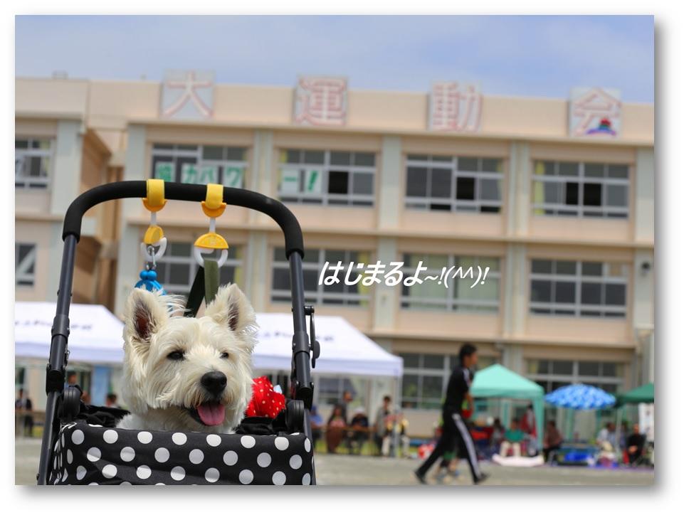 2013春の大運動会_a0161111_22432198.jpg