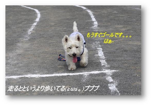 2013春の大運動会_a0161111_2384868.jpg