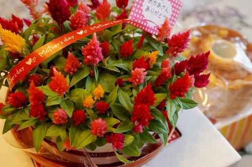 【母の日メニュー前菜編&娘達からのプレゼントのご紹介です♪】_b0033423_6304380.jpg