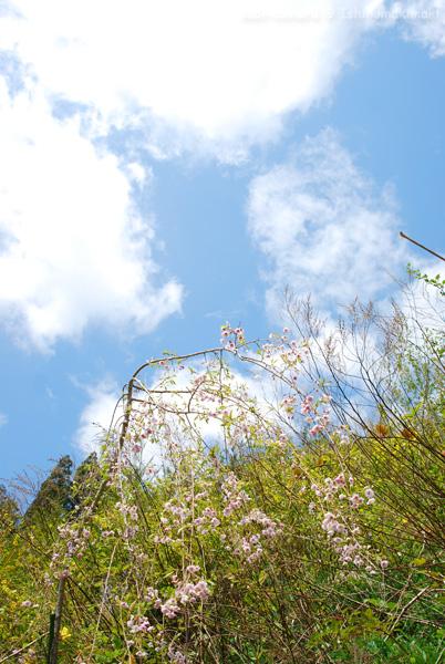 椿咲く_f0164826_22135599.jpg