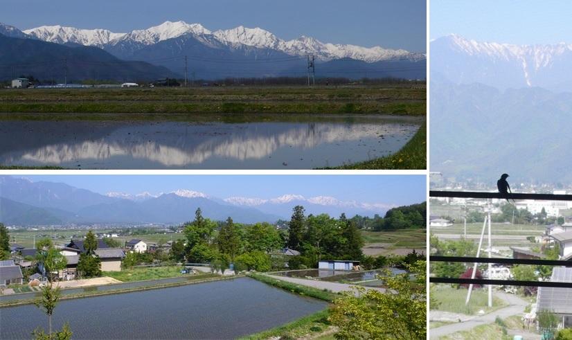 春から初夏へ ツバメと雪稜_a0212730_21342123.jpg