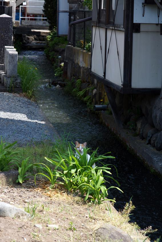 【Nagano Snapshot】 佐久4 ぴんころ地蔵_c0035245_2215186.jpg