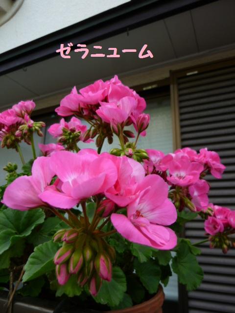d0215861_21264140.jpg