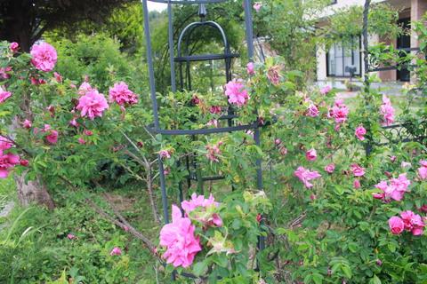 庭のバラ達_e0201009_21553035.jpg