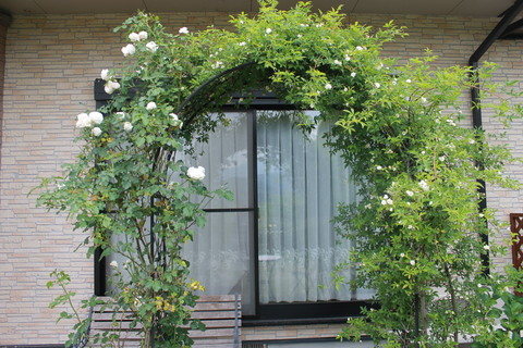庭のバラ達_e0201009_21585280.jpg