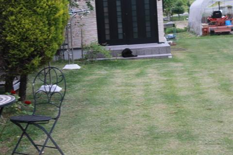 庭のバラ達_e0201009_2204029.jpg
