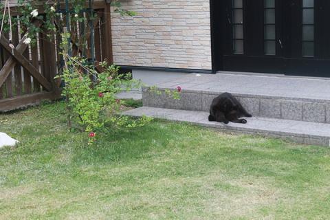 庭のバラ達_e0201009_221542.jpg
