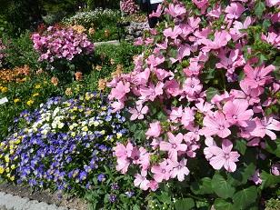 府立植物園へ_a0177314_0243591.jpg