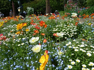 府立植物園へ_a0177314_02712.jpg