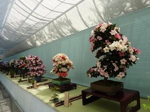 府立植物園へ_a0177314_0284226.jpg