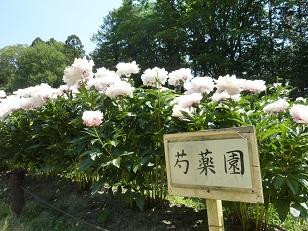 府立植物園へ_a0177314_0304779.jpg