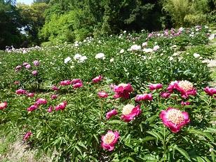 府立植物園へ_a0177314_0322764.jpg