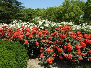府立植物園へ_a0177314_0352885.jpg