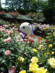 府立植物園へ_a0177314_0355185.jpg