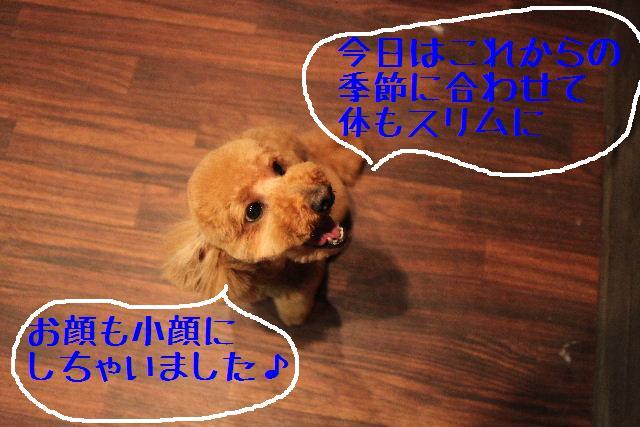 b0130018_18283145.jpg