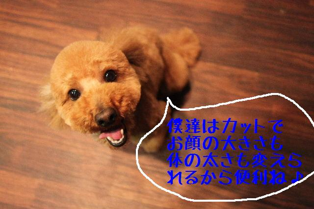 b0130018_18283821.jpg