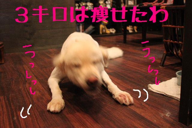 b0130018_1830933.jpg