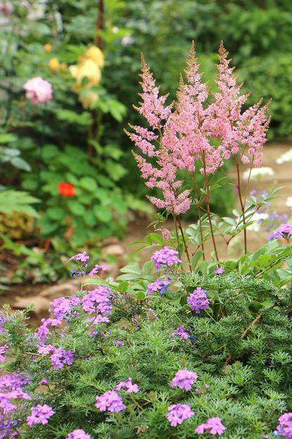 5月 庭の花だより(Ⅳ)_d0150720_12445673.jpg