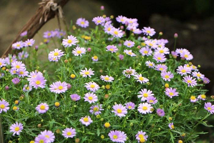 5月 庭の花だより(Ⅳ)_d0150720_12452194.jpg