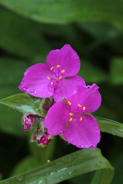 5月 庭の花だより(Ⅳ)_d0150720_12512065.jpg
