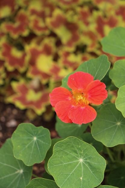 5月 庭の花だより(Ⅳ)_d0150720_1251576.jpg