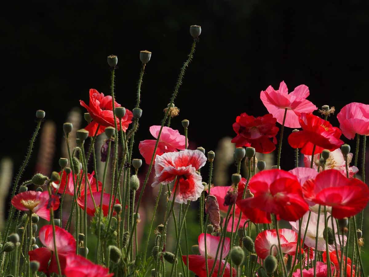 夏のような春の日のお花畑で・・_e0022047_22283690.jpg