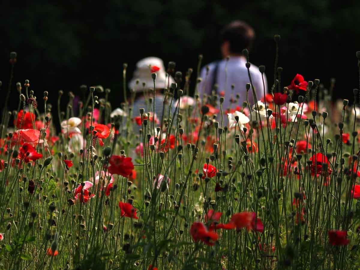 夏のような春の日のお花畑で・・_e0022047_22285856.jpg