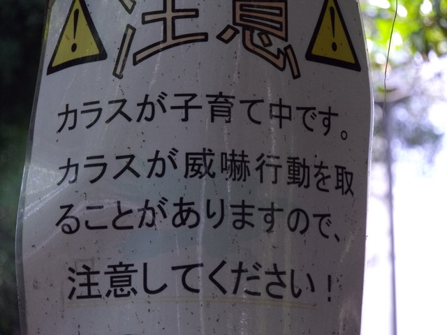 公園における一連の注意事項についての一考察_c0001670_233760.jpg