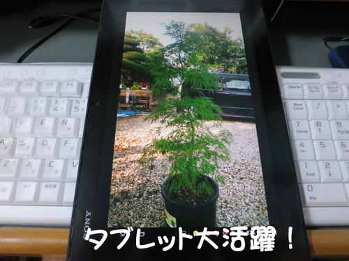 b0200291_22321580.jpg