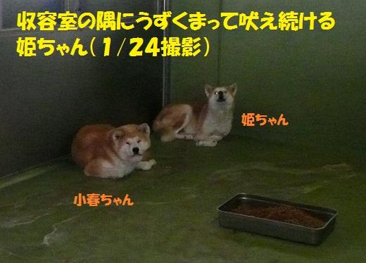 f0121712_15591349.jpg