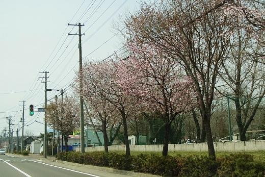 2013年5月27日(月):いきなりの夏日に驚く[中標津町郷土館]_e0062415_1750974.jpg