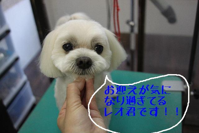 こんばんわぁ~!!_b0130018_22105927.jpg