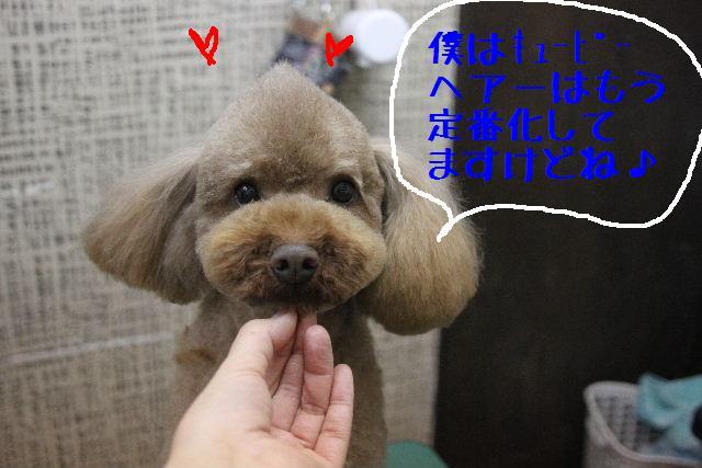 こんばんわぁ~!!_b0130018_22141513.jpg