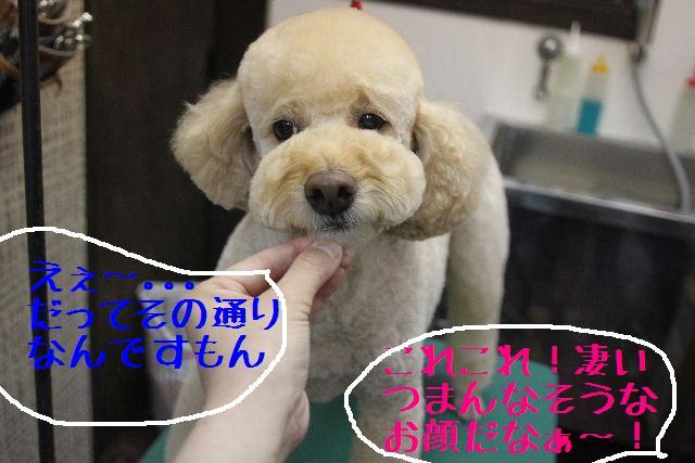 こんばんわぁ~!!_b0130018_2214881.jpg