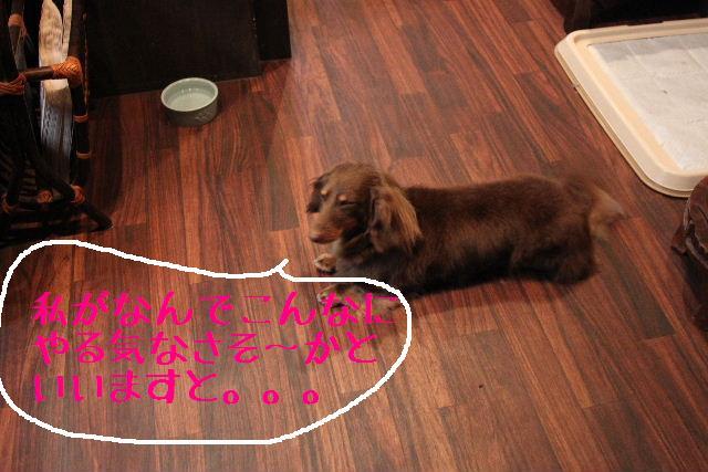 こんばんわぁ~!!_b0130018_2243730.jpg