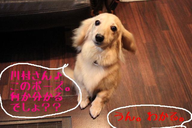 こんばんわぁ~!!_b0130018_2261291.jpg