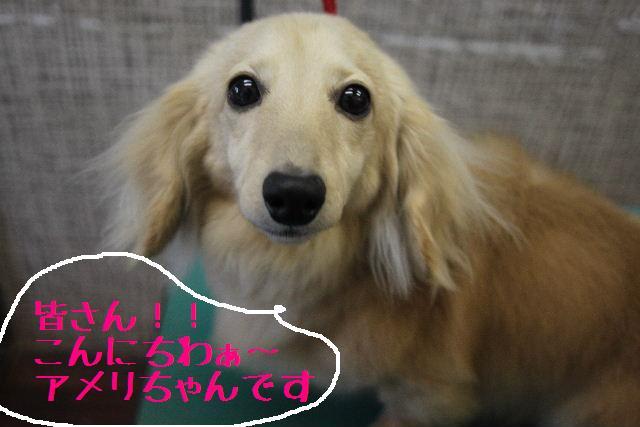 こんばんわぁ~!!_b0130018_226453.jpg