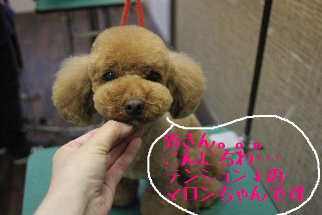 こんばんわぁ~!!_b0130018_2283792.jpg